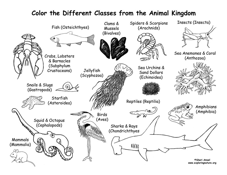 coloring pages animal classification activities - photo#4