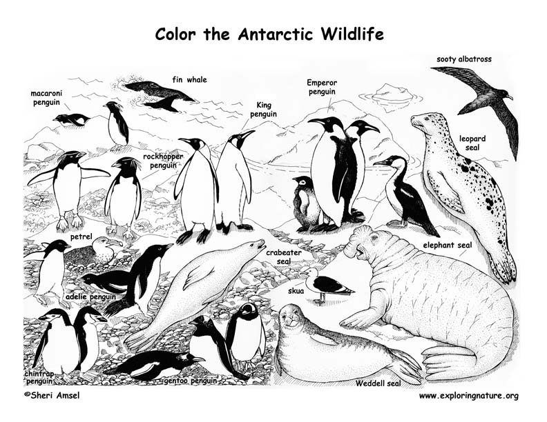 Antarctica free coloring pages for Antarctic animals coloring pages