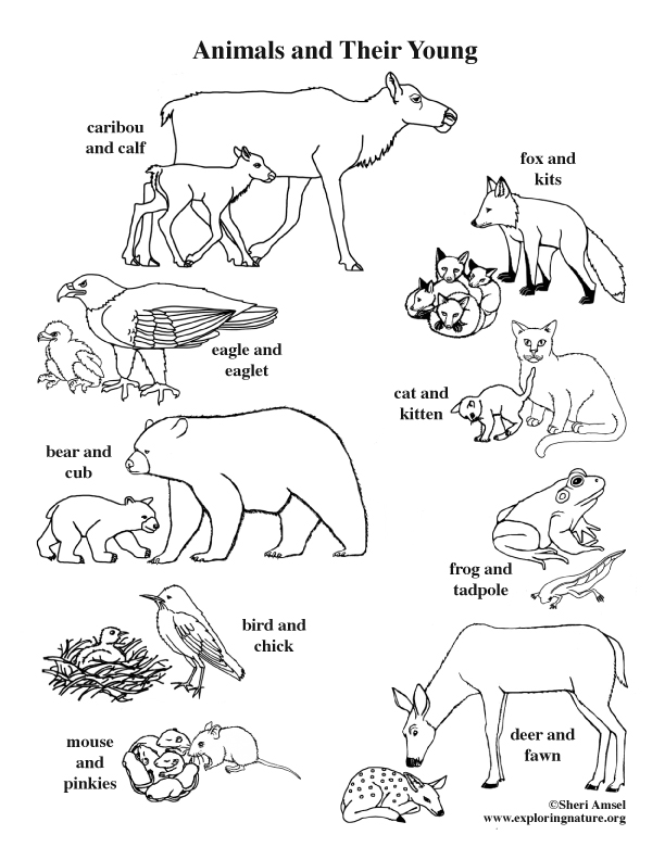 animals and their young coloring page. Black Bedroom Furniture Sets. Home Design Ideas