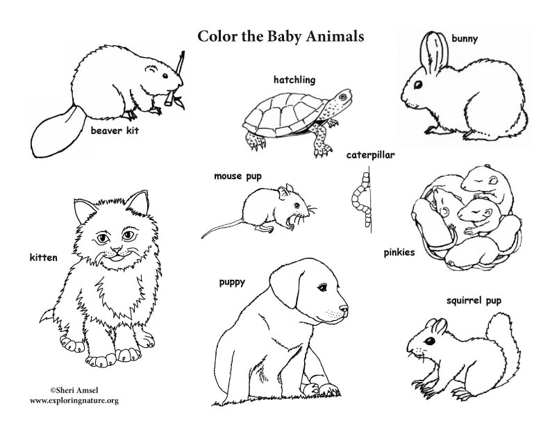 Baby Animal Labeled Coloring Page