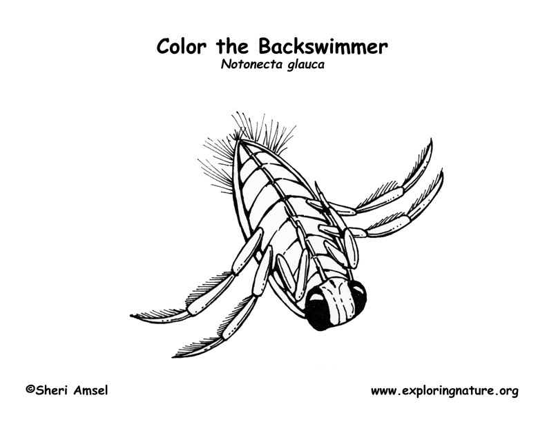 Backswimmer Coloring Page