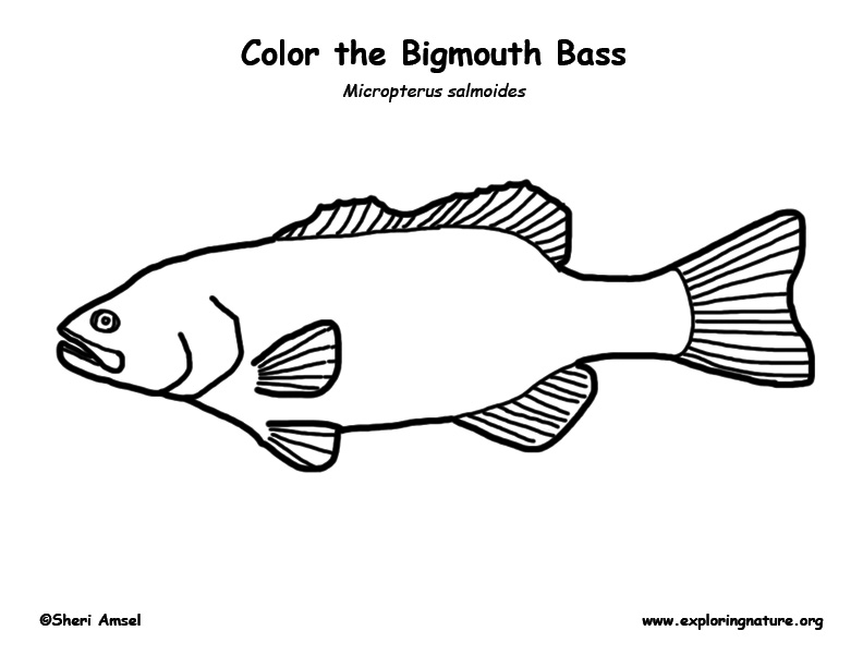 coloring book pages bass - photo#30