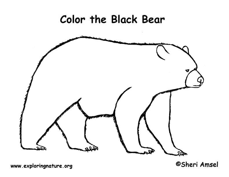 Bear Coloring Pages Pdf : Bear black coloring page