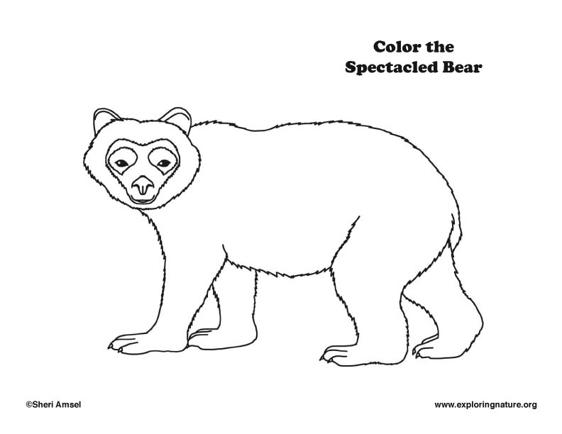 Spectacled Bear Coloring Page,  Spectacled bear