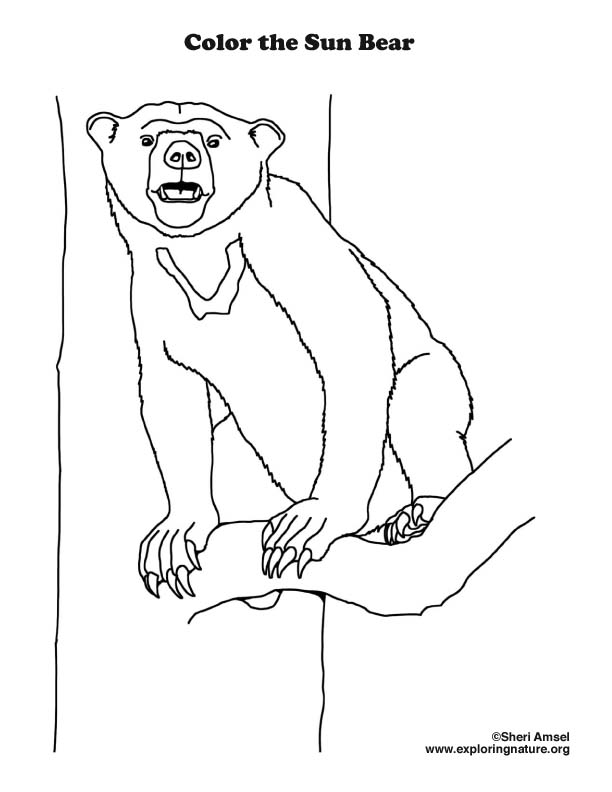 Bear Sun Coloring Page