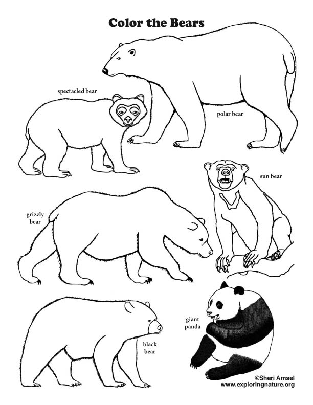 Bears of the World Coloring Page