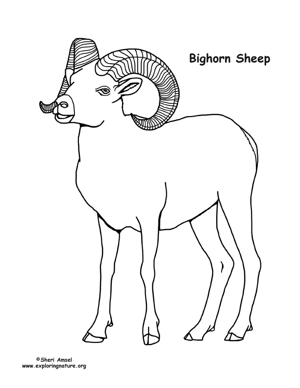 coloring page of a sheep - bighorn sheep coloring page