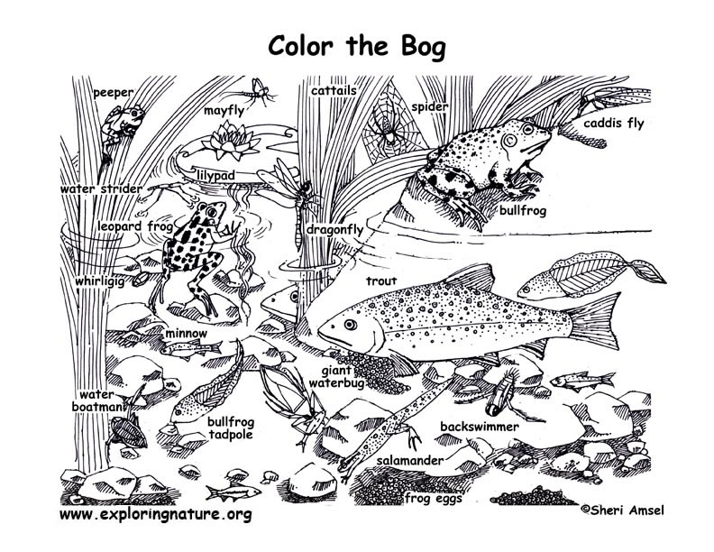 Bog Coloring Page
