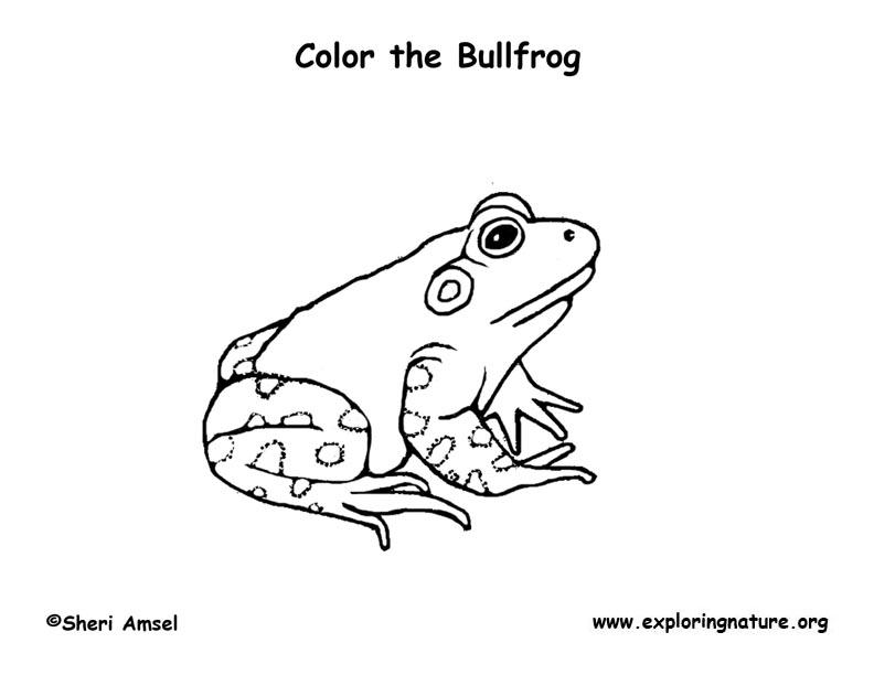 Bullfrog Coloring Page