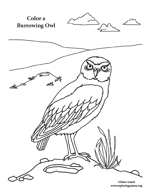 Owl (Burrowing) Coloring Page