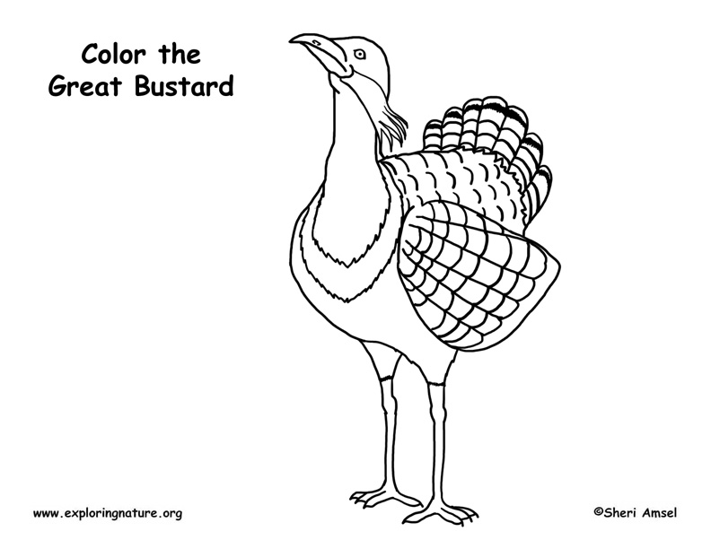 bustard  great  coloring page