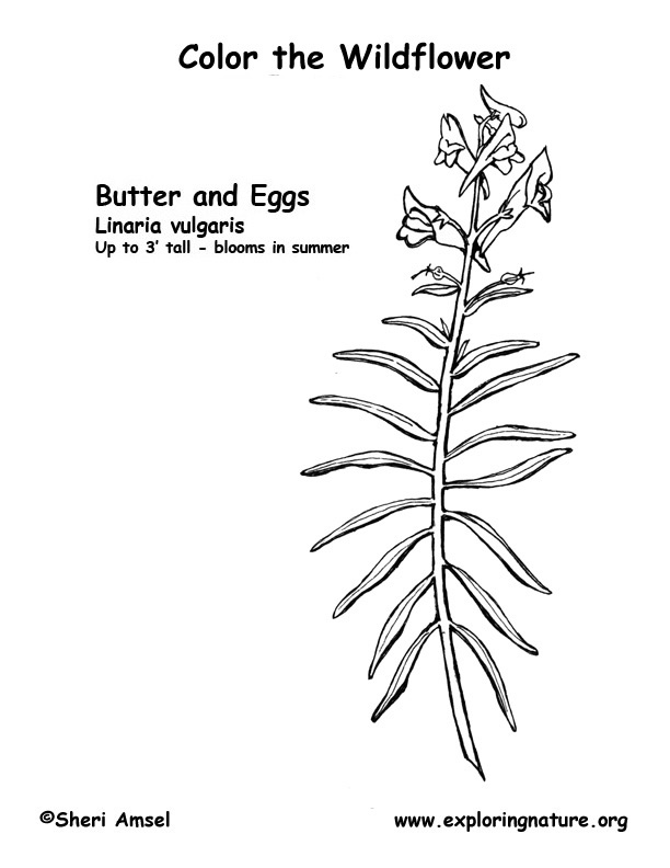 Butter and Eggs Coloring Page