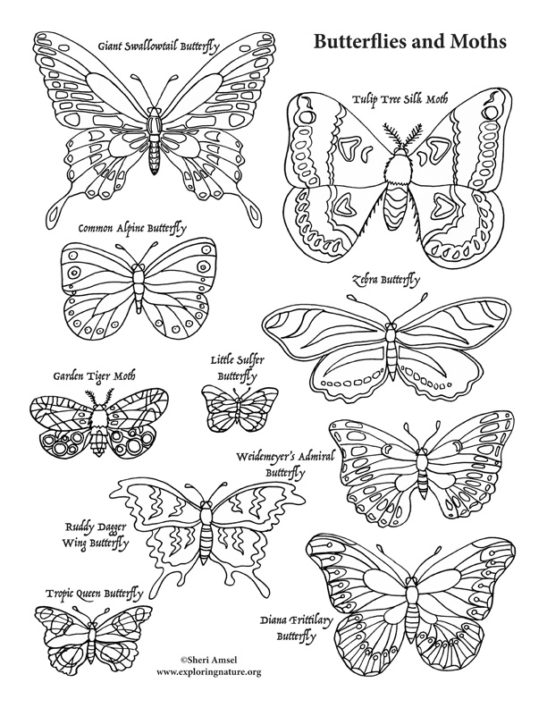 butterflies and moths coloring page