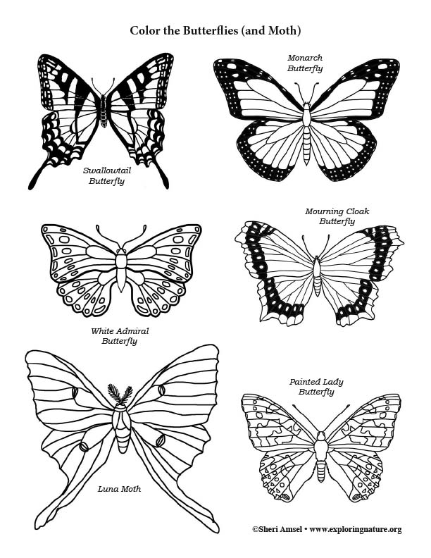 Butterflies And Moths Of The Forest Coloring Page