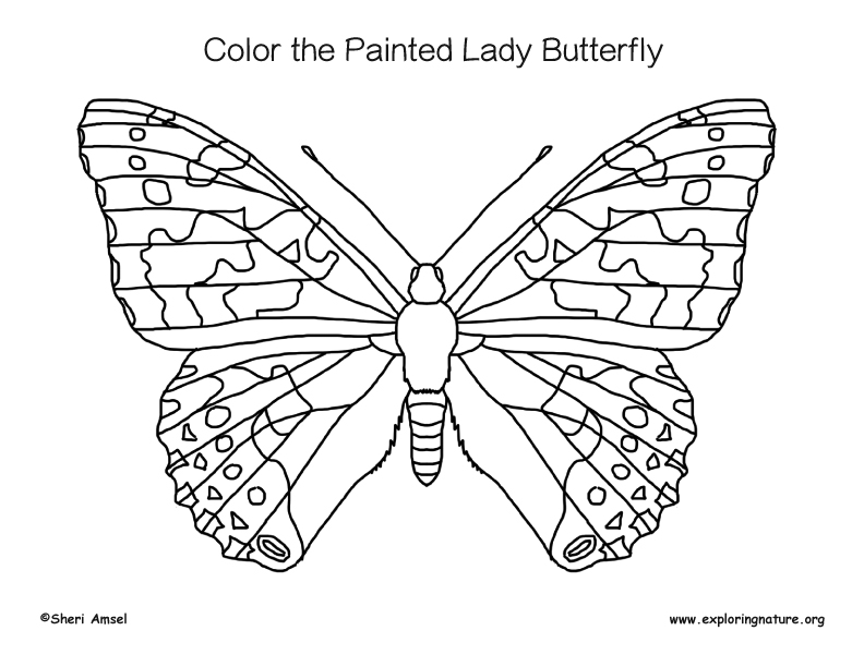 coloring pages painted lady butterfly - photo#2