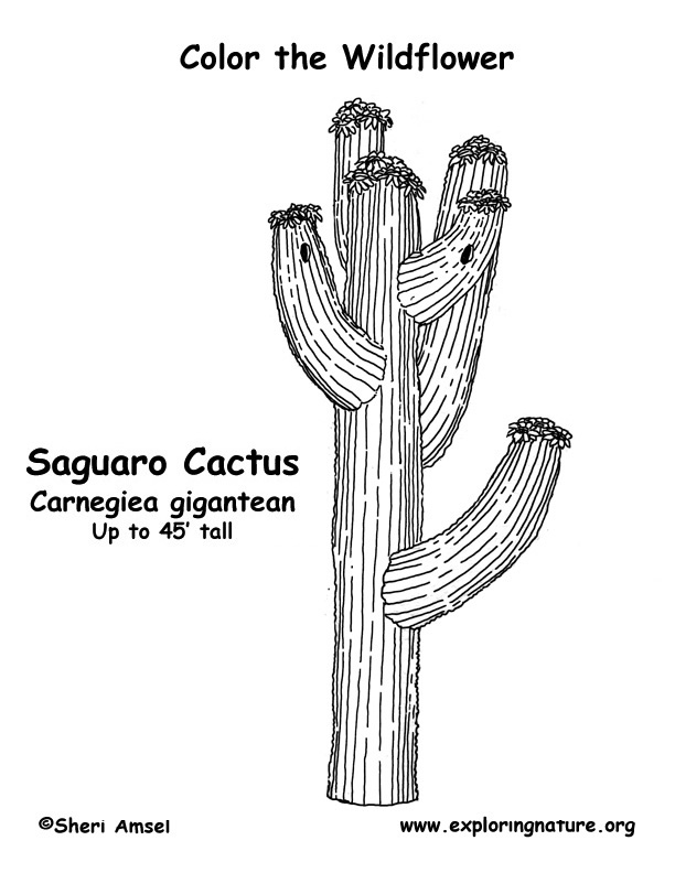coloring pages for saugaros - photo#10
