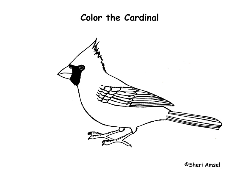 8400 Coloring Pages Of Cardinal Bird Images & Pictures In HD