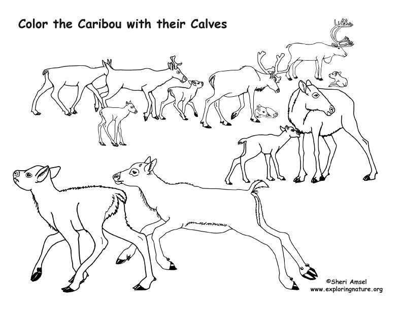 Caribou with their Calves Coloring Page