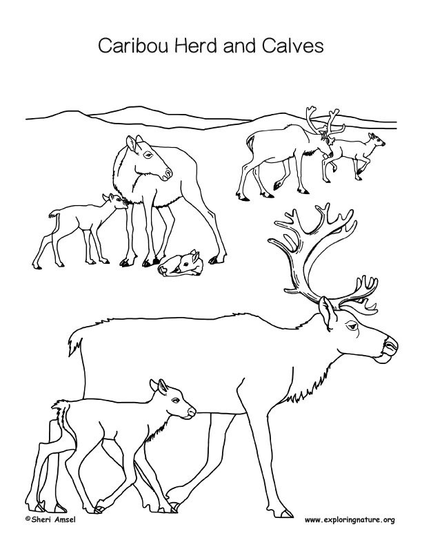 Caribou and Calf Coloring Page
