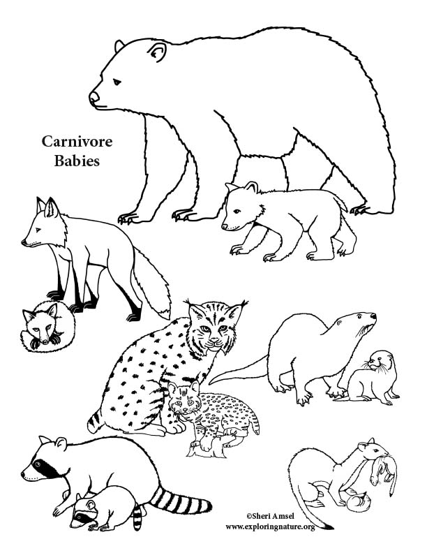 Carnivore Babies Coloring Page
