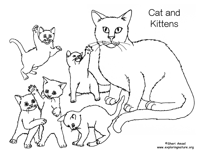 - Cat And Kittens Coloring Page