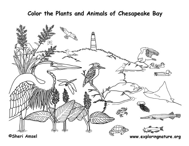 bay coloring pages - photo#10