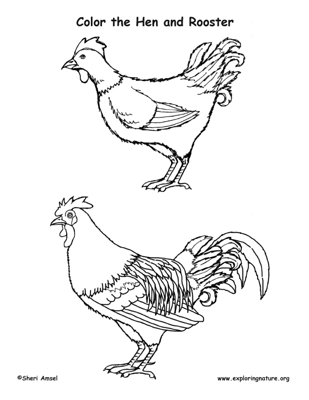 Rooster Coloring Pages And Hen Cooloring