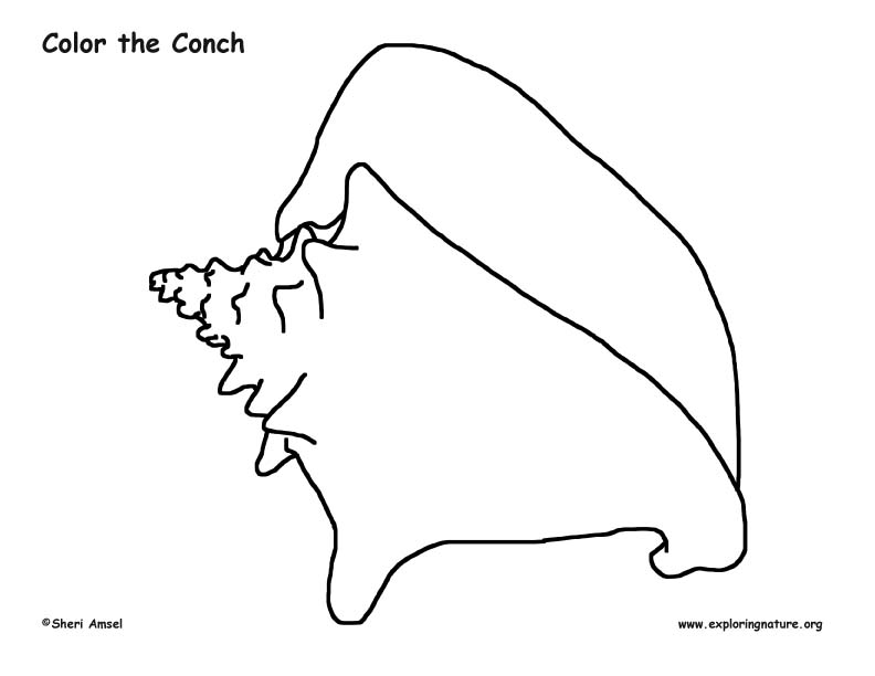 conch shell coloring pages - photo#12