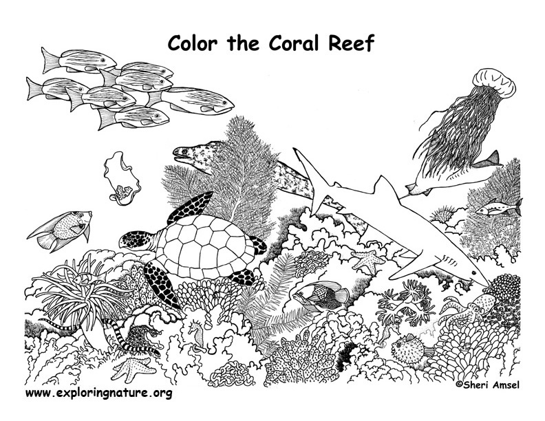coral reef coloring book pages - photo#7