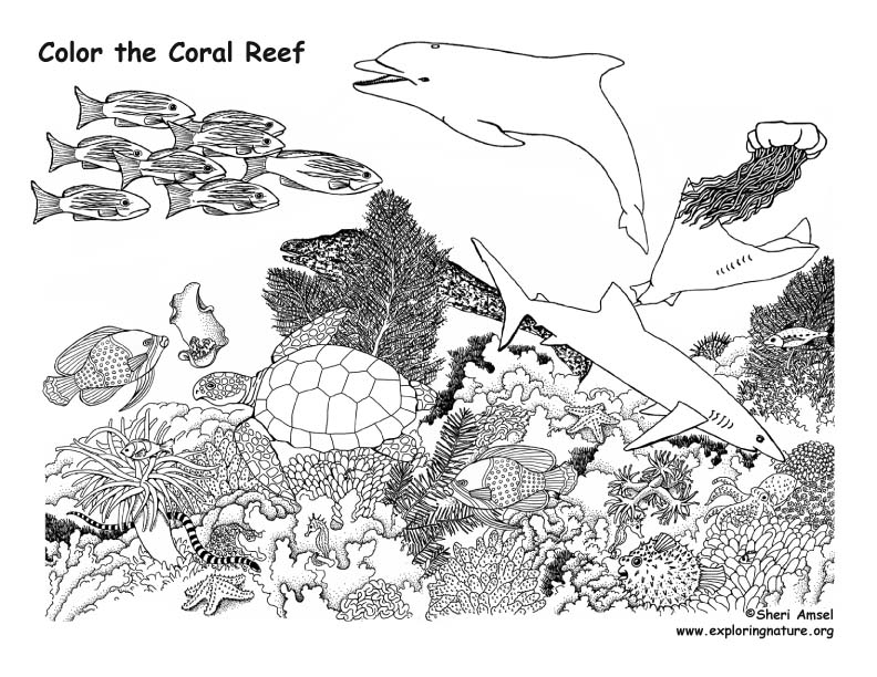 Coral #46 (Nature) – Printable coloring pages | 612x792