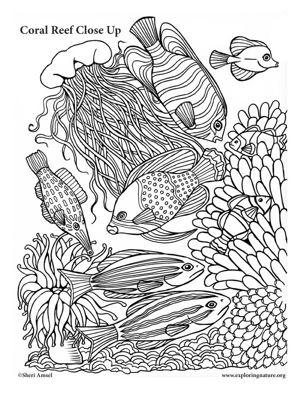 coral reef close up coloring page