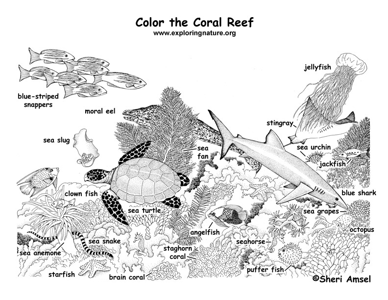 Coral reef labeled coloring page for Coloring pages of coral reefs