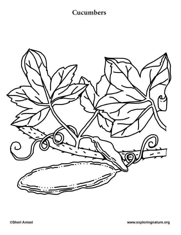 cucumber coloring page