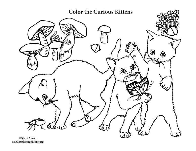 Curious Kittens Coloring Page