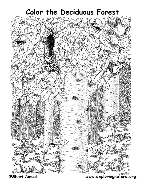 Forest Coloring Pages - Best Coloring Pages For Kids | 792x612