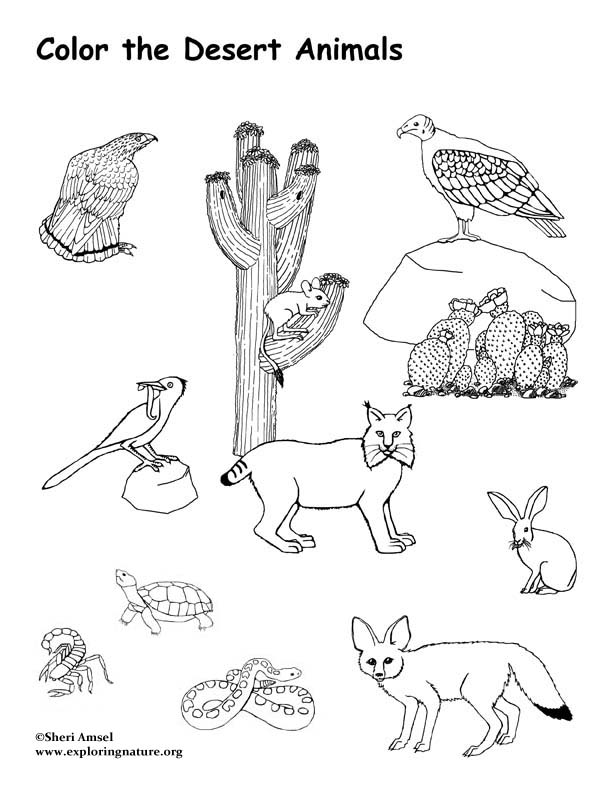 Coloring Pages Of Wetland Animals : Desert animals coloring page exploring nature