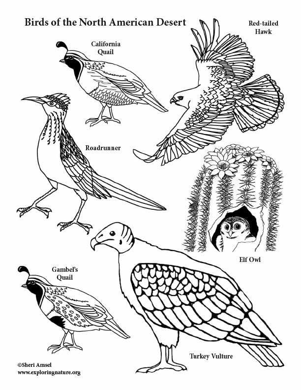 Desert Birds Coloring Page