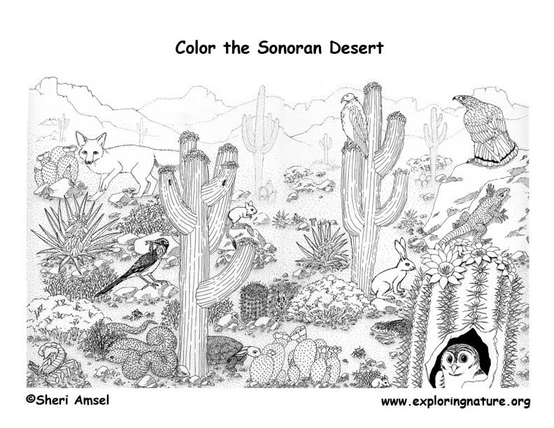 Desert (Sonoran) Detailed Coloring Page