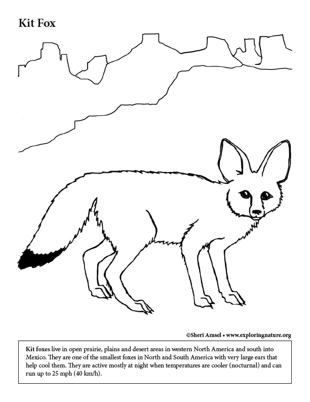 Desert Kit Fox Coloring Page