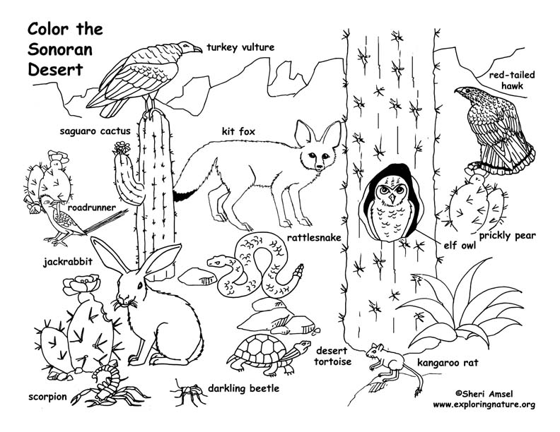 Animals Coloring Pages Pdf Coloring Pages