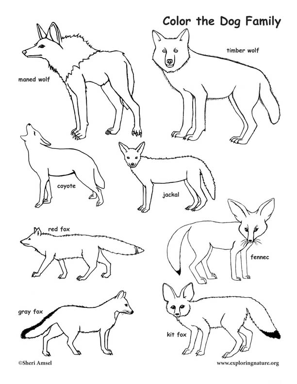 Dog Family Coloring Page