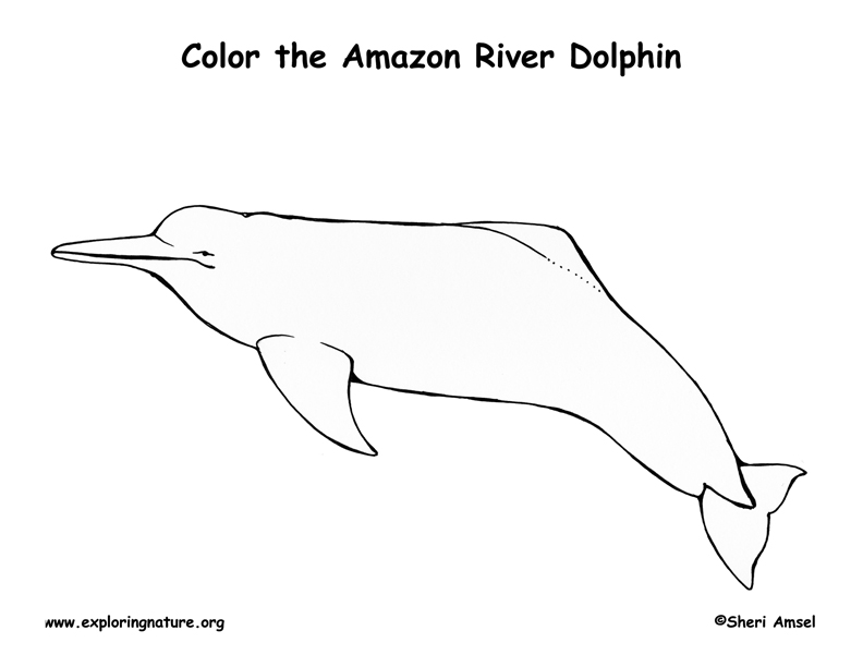 Dolphin Coloring Pages Pdf : Dolphin amazon river coloring page