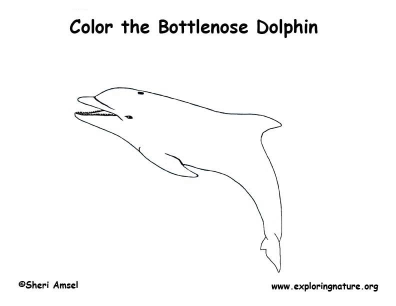 Dolphin Coloring Page, Bottlenose Dolphin Coloring Page