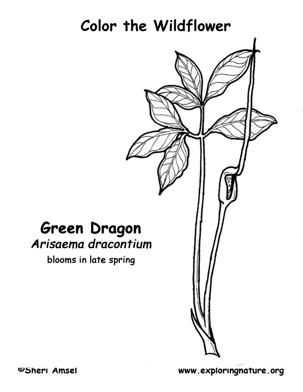 Dragon (Green) Wildflower Coloring Page