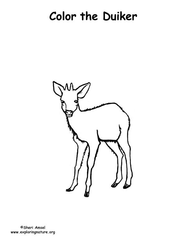 Duiker (Deer) Coloring Page