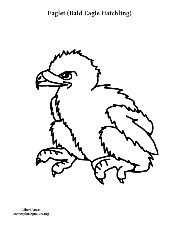 Eaglet (Bald Eagle Hatching) Coloring Page