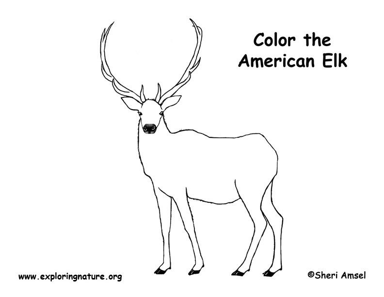 Elk Coloring Page