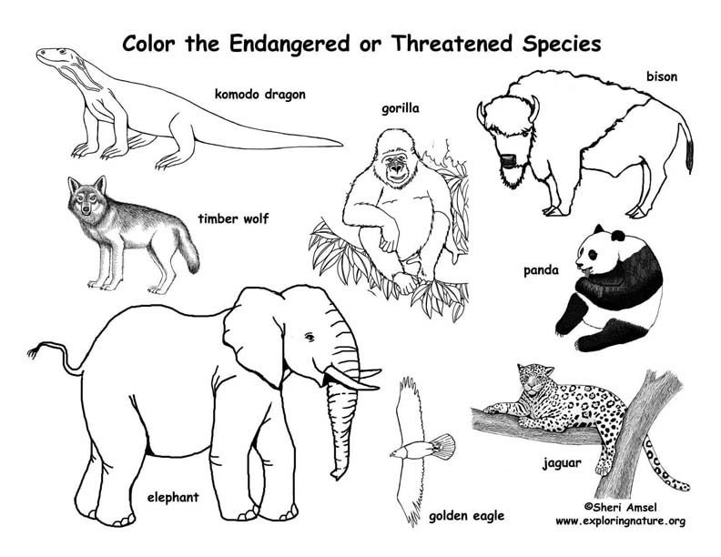 endangered animal coloring pages free - photo#1