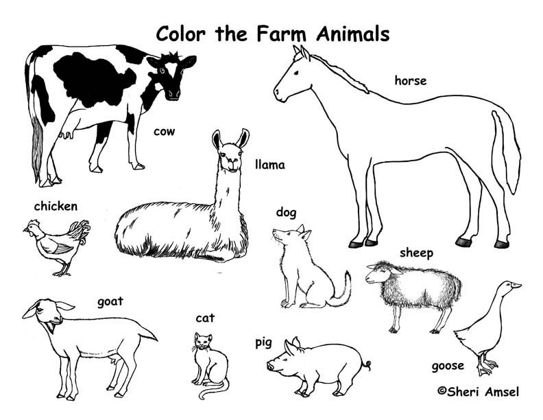 printable coloring pages farm animal - photo#22