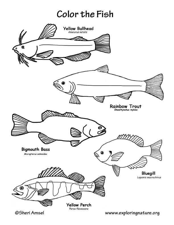 Fish Freshwater Coloring Page